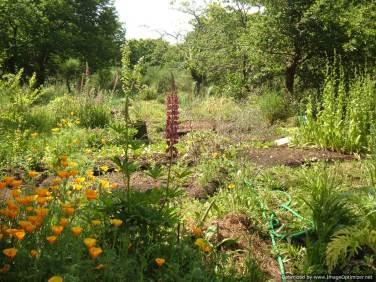 Biodynamic gardening Portugal